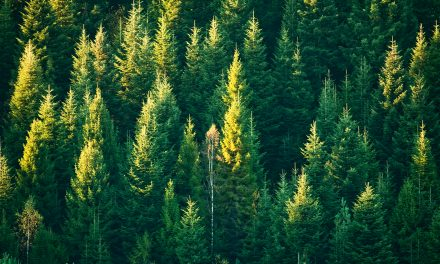 20 Tips to Living A Greener Life
